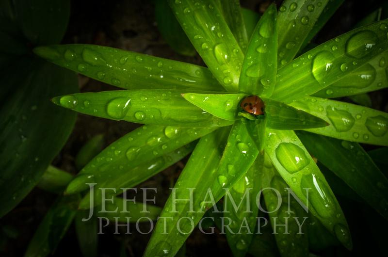 Ladybug Takes Shelter